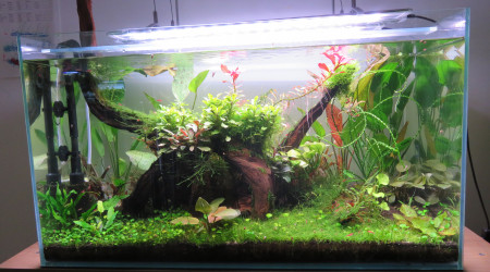 aquarium 100L hollandais à crevette