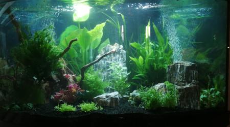 aquarium Trigon line led
