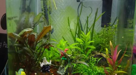aquarium 30L Lana