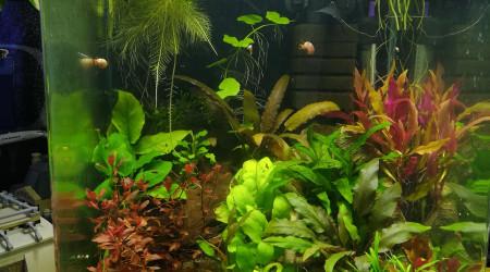 aquarium 30L Moi