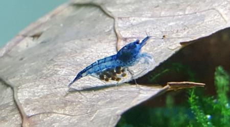 aquarium Nanos