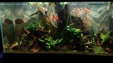 aquarium 233l amazonien