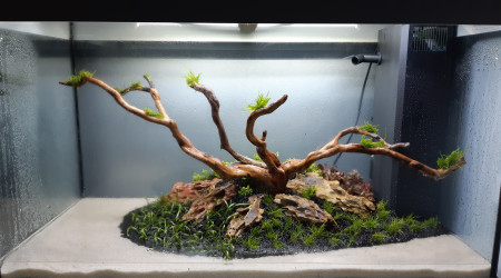 aquarium Rio125