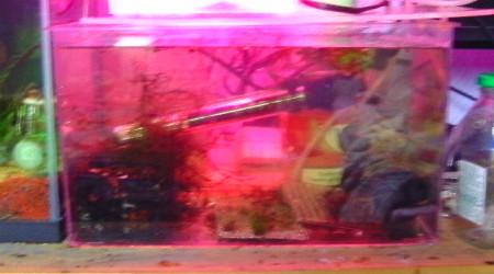 aquarium isoloir