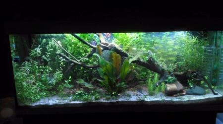 aquarium Aqua Philou