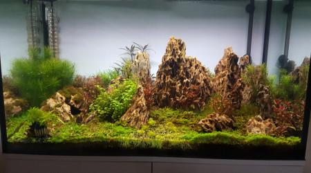 aquarium Celui de notre chez nous