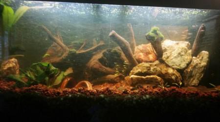 aquarium Aqua 250L
