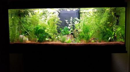 aquarium Bac 1
