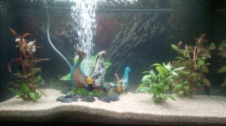 aquarium Premier aqua