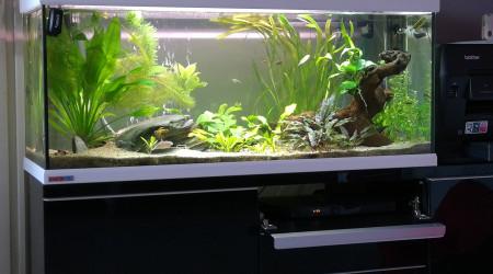 aquarium 250L