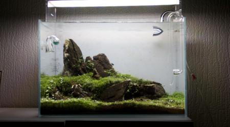 aquarium Lunar