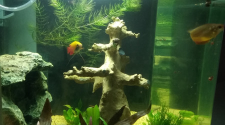 aquarium Rena biocube 50