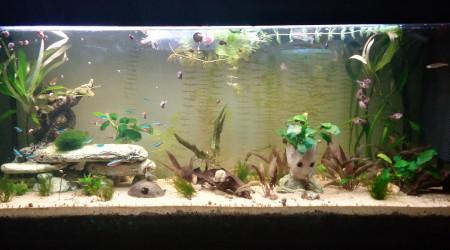 aquarium Bébé Groot