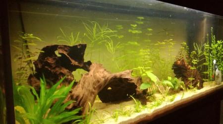 aquarium Juwel 240