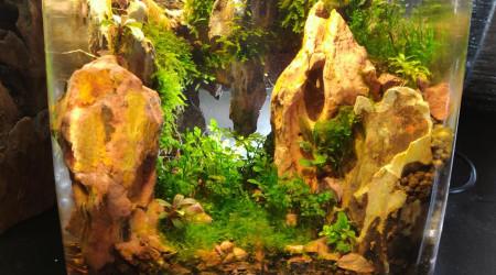 aquarium PicoPico