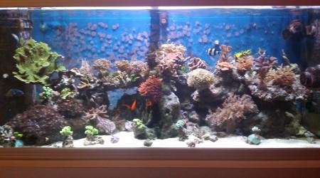 aquarium Reef