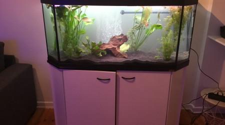 aquarium Aqua 300