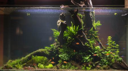 aquarium Rêve de Printemps