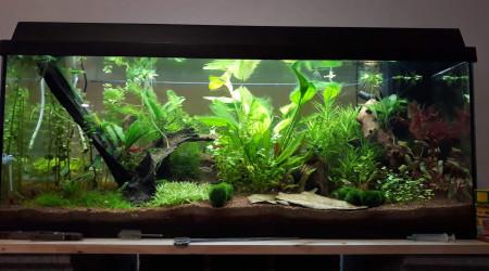 aquarium 1er Asiatique 160L