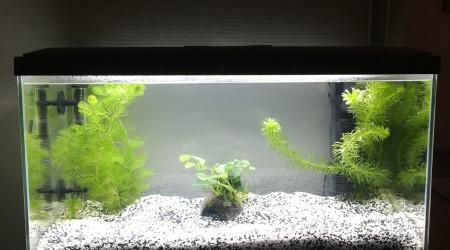 aquarium Aquarium de Francis