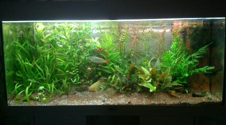 aquarium 18O australo guinn