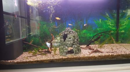 aquarium Communautaire fille