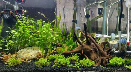 aquarium premier