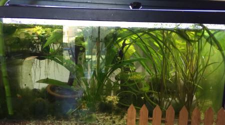 aquarium Jungle 60