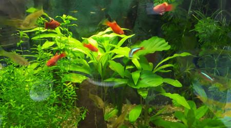 aquarium Nano-20 l