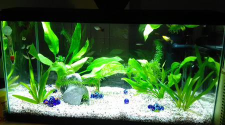 aquarium ciano