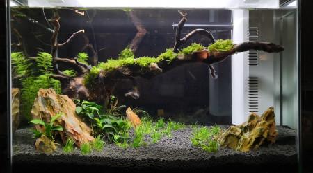 aquarium HOME 60