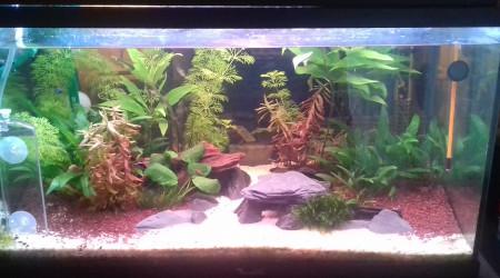 aquarium aqua1