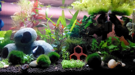 aquarium 60 litres Crevettes et Danio Margaritus