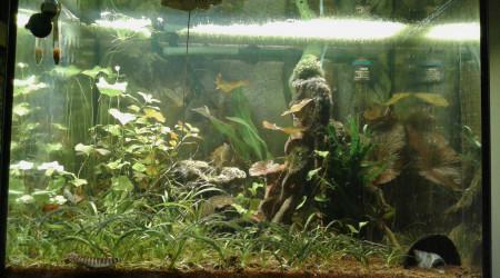 aquarium Asie mangrove 150L
