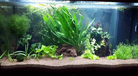 aquarium Rio Juwel