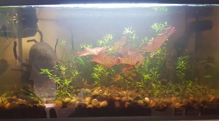 aquarium 54L lowtech
