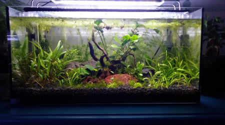aquarium Nano chuna miels filtration naturelle