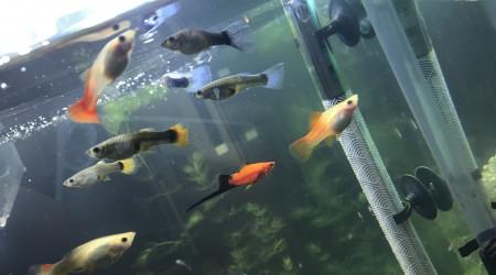 aquarium Plusieurs espèce