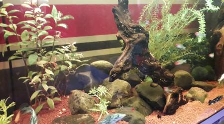 aquarium Bac 120l