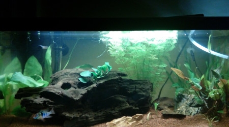 aquarium 60 litres amazonien