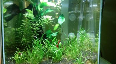 aquarium 15 litres aquascape