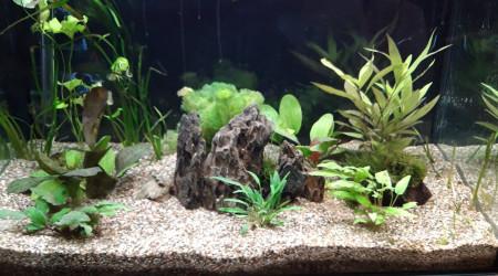aquarium Aquarium 160 litres communautaire