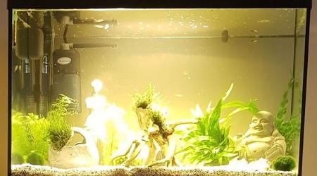 aquarium 54l Guppys