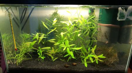 aquarium Repro Crevette