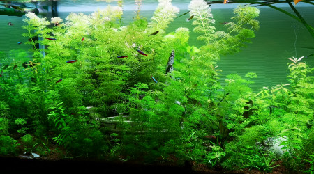 aquarium Aqua 1