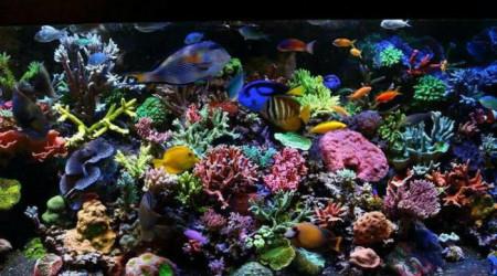aquarium Notre projet