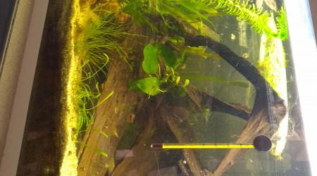 aquarium Mon 70L