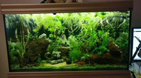 aquarium Aqualantis 450