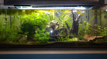 aquarium Aqua 120L
