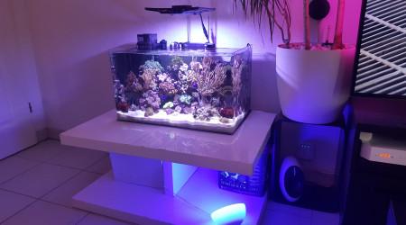 aquarium Bora  Bora